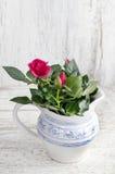美丽在土气陶瓷花瓶上升了 免版税图库摄影