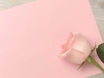 美丽在桃红色背景上升了 免版税库存照片