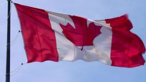 美丽如画的挥动在风的杆的国家标志加拿大旗子红色白色枫叶横幅在蓝天晴朗的背景 股票录像