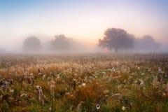 美丽如画的秋天风景有薄雾的黎明在m的一个橡木树丛里 免版税库存图片