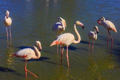 美丽如画的鸟互相沟通 图库摄影