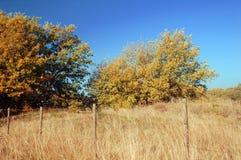 美丽如画秋天的横向o 免版税库存图片