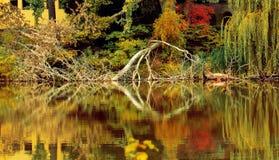 美丽如画的下落的树在湖 库存照片