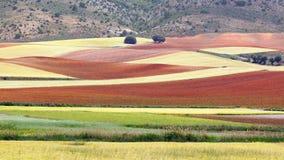 美丽如画的与领域的自然农村风景 免版税库存照片
