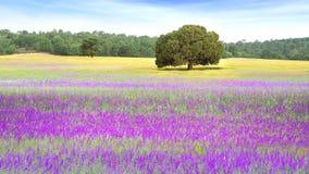 美丽如画的与领域的自然农村风景 免版税图库摄影