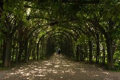 美丽如画的入口到被成拱形的走廊(庭院荫径)里上升的植物 阿尔汉格尔斯克州村庄  俄国 免版税图库摄影