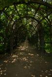 美丽如画的入口到被成拱形的走廊(庭院荫径)里上升的植物 阿尔汉格尔斯克州村庄  俄国 库存照片