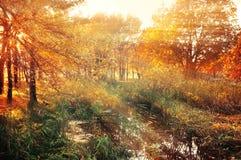 美丽如画的日出在老橡木树丛里在秋天早晨 库存图片