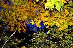美丽如画的晚上秋天上色了叶子 免版税库存照片