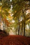 美丽如画的森林道路 图库摄影