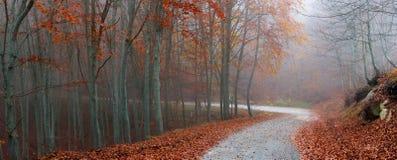 美丽如画的秋天道路 库存图片