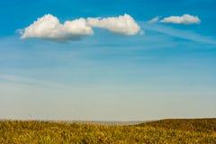 美丽如画的绿色领域 免版税库存照片