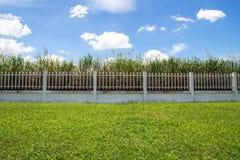 美丽工业庄园的,绿色领域篱芭工厂和 免版税图库摄影