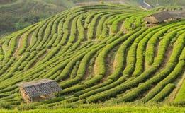 美丽村庄和绿茶的大阳台 库存图片