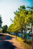 美丽森林 免版税库存图片