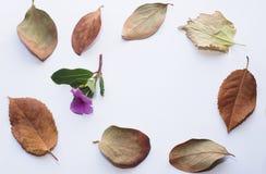 美丽的下落的叶子和一朵小的桃红色花壁角框架  库存照片