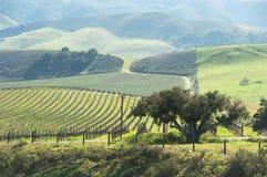 美丽的中央海岸葡萄园 免版税库存照片