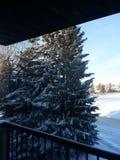 美丽的云杉的树我们的窗口外 库存图片