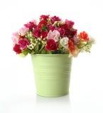 美丽的五颜六色的光盘花卉花 免版税库存图片
