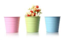 美丽的五颜六色的光盘花卉花 库存照片