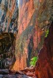 美丽的五颜六色的峡谷 免版税库存图片