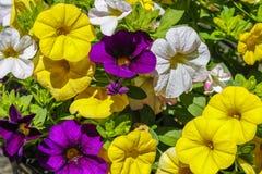 美丽的五颜六色的春天花 免版税库存照片