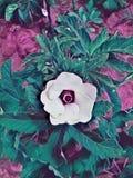 美丽的五颜六色的玫瑰 免版税图库摄影