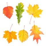 美丽的五颜六色的秋叶的汇集 免版税库存图片