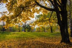 美丽的五颜六色的秋叶的汇集 库存照片