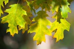美丽的五颜六色的秋叶 免版税图库摄影