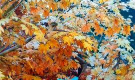 美丽的五颜六色的秋叶 库存照片