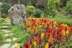 美丽的五颜六色的花、一块石头和一条路装饰的庭院 图库摄影