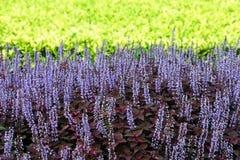 美丽的五颜六色的花园 图库摄影
