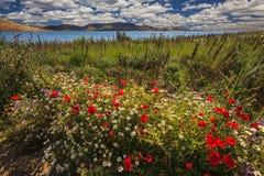 美丽的五颜六色的花在海的背景中 库存图片