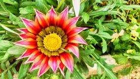 美丽的五颜六色的花 免版税库存照片