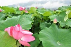 美丽的五颜六色的郁金香和虹膜花 免版税库存图片