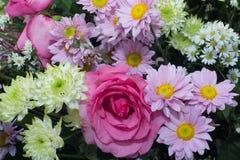 美丽的五颜六色的雏菊花和桃红色玫瑰开花作为backgrou 库存图片
