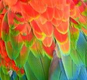 美丽的五颜六色的高详细的金刚鹦鹉羽毛 免版税库存照片