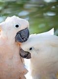 美丽的五颜六色的鹦鹉 免版税库存照片