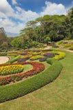 美丽的亚洲多数公园 库存照片