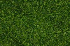 美丽的人为草皮绿草 ?? 免版税库存照片