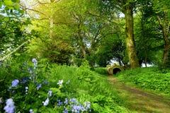 美丽的会开蓝色钟形花的草在Ducketts树丛、一个被破坏的19世纪伟大的房子和前庄园庭院里开花开花在怒火 免版税库存图片