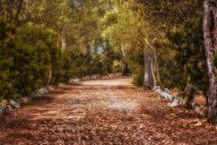 美丽的偏僻的大道 库存照片