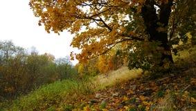 美丽的偏僻的树在秋天 库存照片