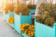 美丽的公园和庭院在夏天和秋天 库存图片