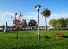 美丽的公园在有红色长凳、桃红色开花的樱桃树和帕尔马树的春天在与天空蔚蓝的好日子 免版税库存图片