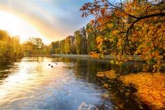 美丽的公园池塘在日落的秋天 免版税库存照片