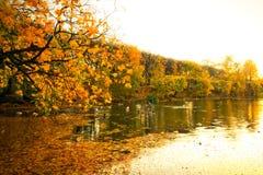 美丽的公园池塘在秋天 免版税库存照片