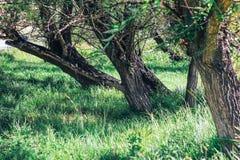 美丽的公园绿色树 免版税库存照片