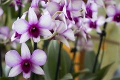 美丽的兰花在庭院里 库存照片